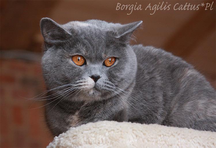 Sposoby Porozumiewania Się Kotów Mowa Kociego Ciała