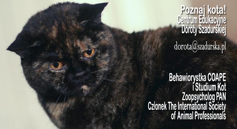 Webinar Zachowania agresywne u kotów